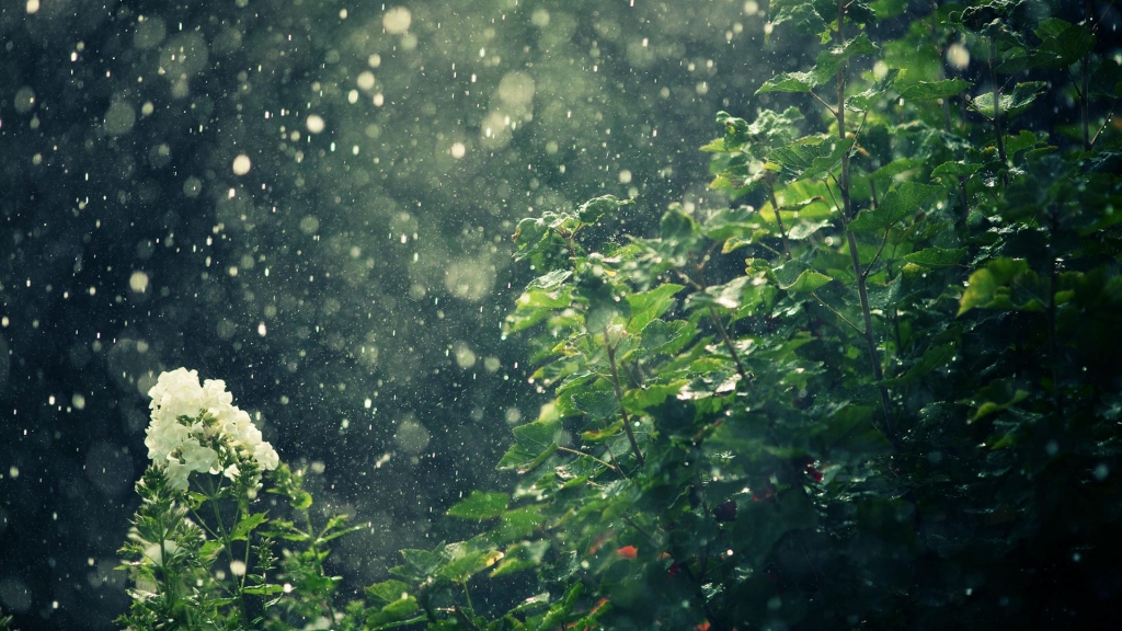 Rain falling softly on green plants