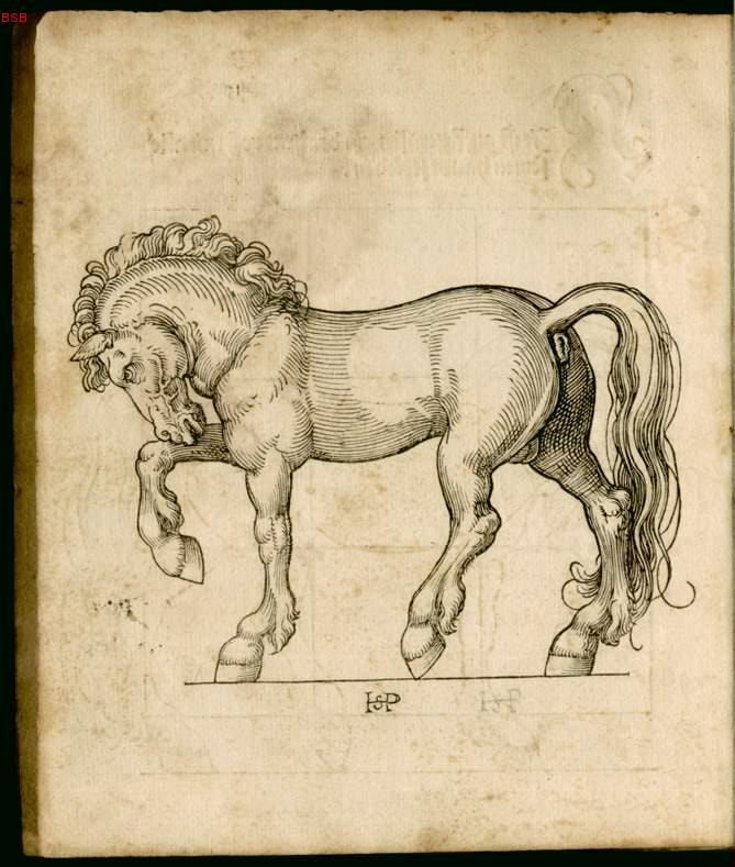 Detailed drawing of a horse