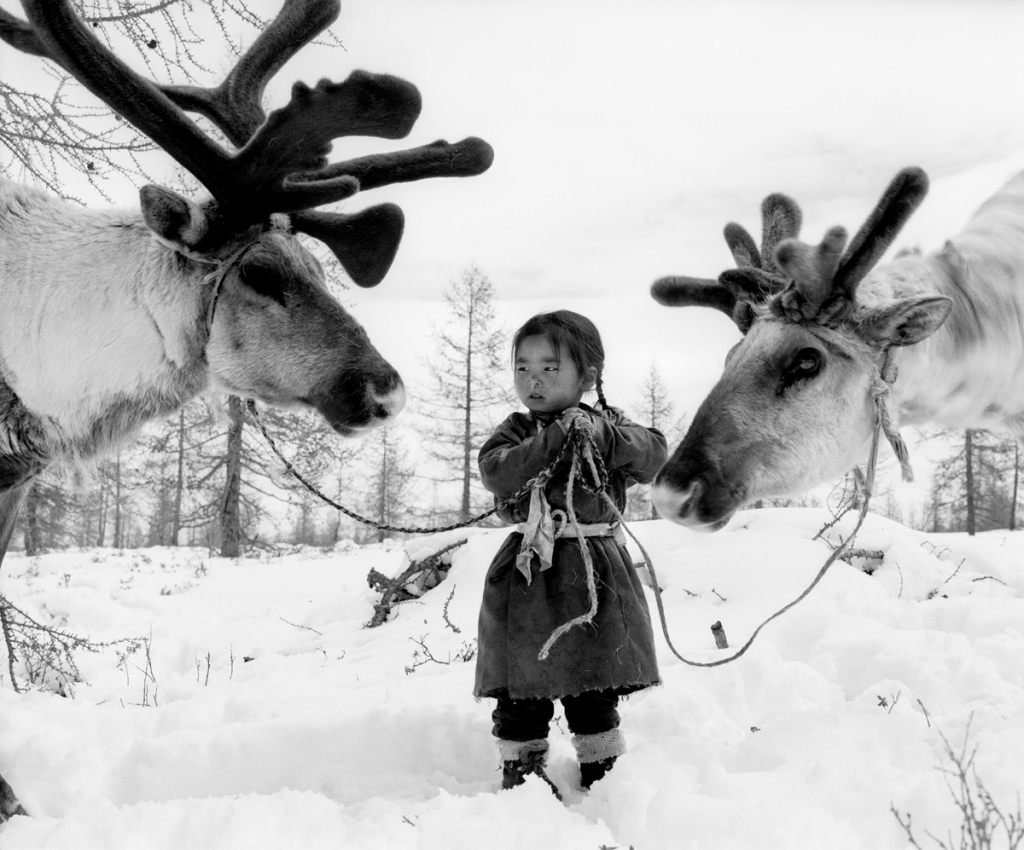 Mongolian girl holds the reins of two reindeer in the snow.
