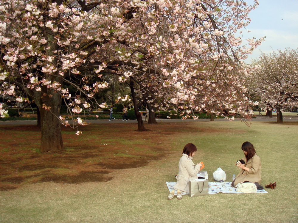 Two young Japanese women sit under a cherry tree.