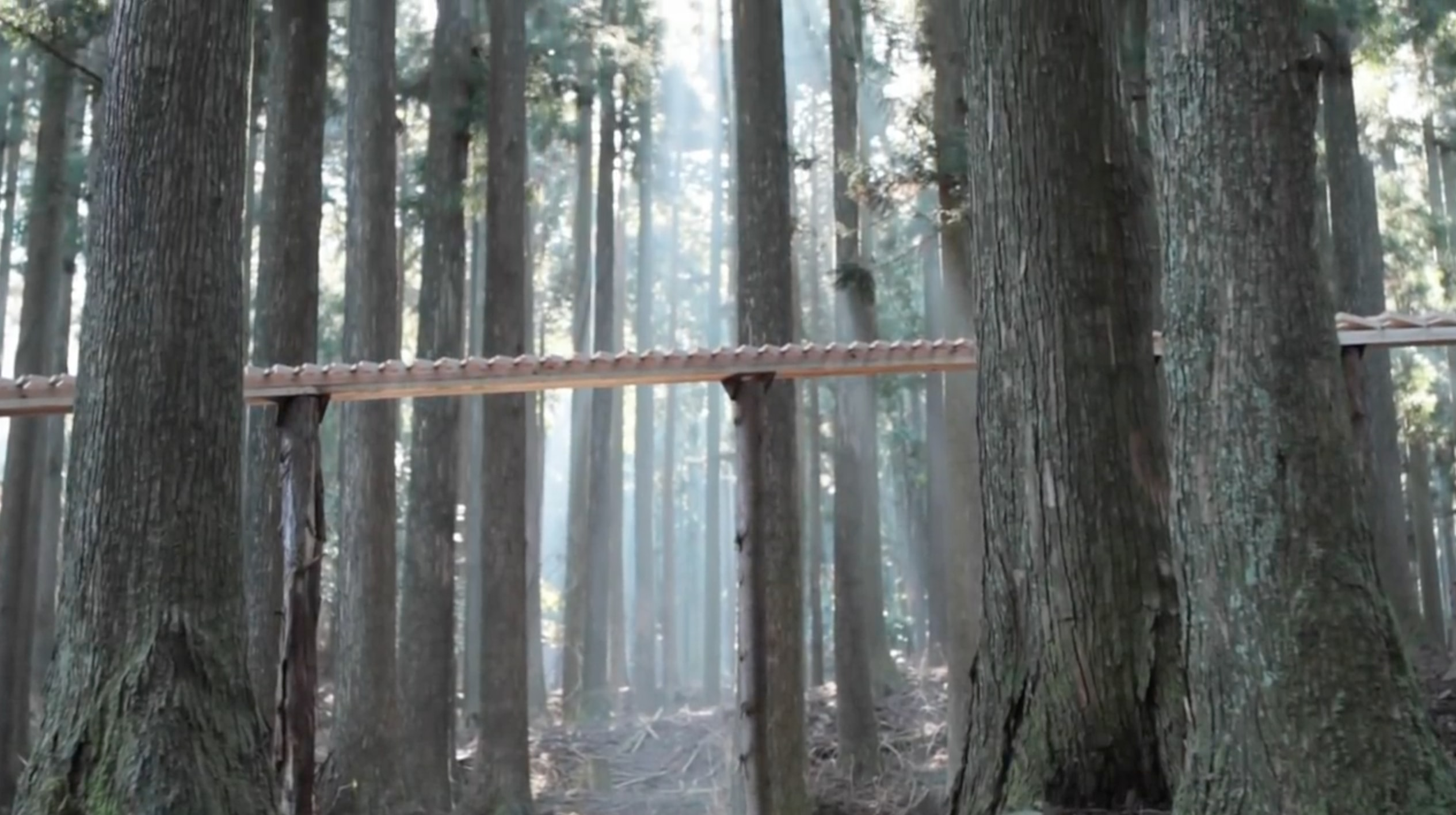Wooden blocks set up in a forest to create a massive xylophone