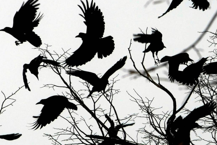 Crows take flight from a tree with no leaves