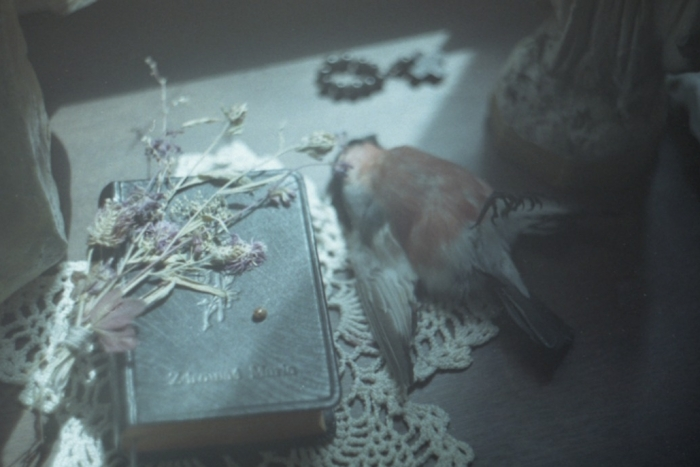 Dried flowers laying on an old book