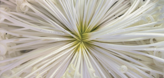 A close up of the centre of a white flower
