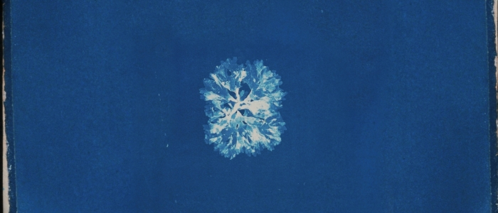 A snowflake on a blue background.