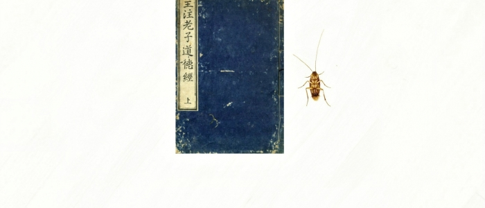 Cricket lying next to book
