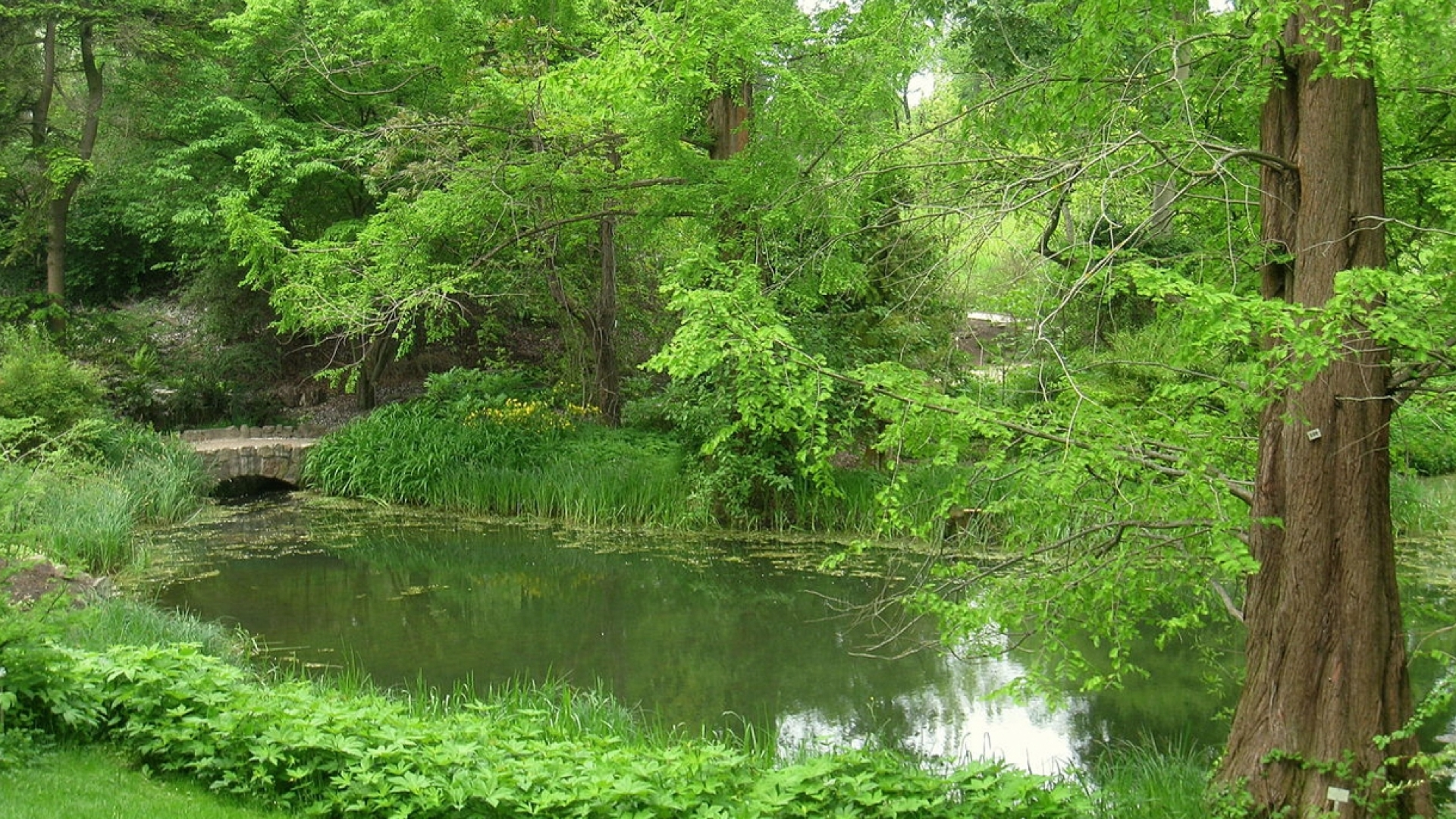 Berlin botanical garden pond and trees